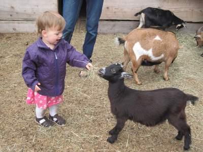 Ellen synes dyrene er så hyggelige - og hun er rigtig god til at gå roligt til dem, så de også er trygge ved hende.