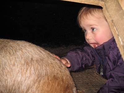 En af gederne havde lagt sig ind i et lille skur - Ellen syntes hun ville besøge den. (Det var naturligvis et sted børnene gerne måtte komme.)