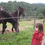 Et par venlige heste