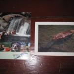 De udvalgte postkort