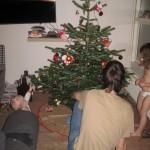 Juletræet beundrers