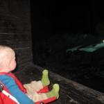Karen kigger på hajer - det ses tydeligt at den lige har spist