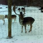 Nysgerrigt dyr