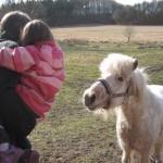 Nysgerrig pony - lidt nervøs Ellen