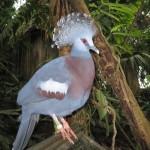 Fin fugl