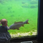 Spændende fisk