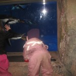 Pingvinkigning