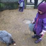 Hønsene skulle også have lidt