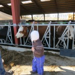 Til køernes forårsfest