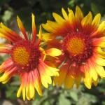 Flotte blomster i haven