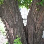 Træ holdt sammen af bolte