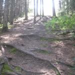 Rødderne har lavet trapper