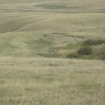 Grasslands - og, hvis man ser godt efter, en whitetail
