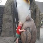 Pingvinknus